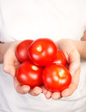 Hands Holding Ripe Tomatoes Royalty Free Stock Photography