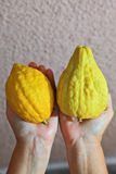 The hands holding the ritual citrus - etrog Royalty Free Stock Image