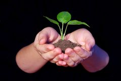 Hands holding sapling Stock Image