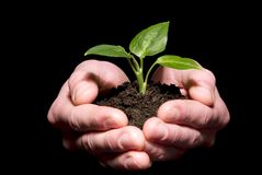 Hands holding sapling Royalty Free Stock Photography