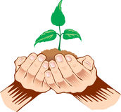 Hands holding sapling in soil. With symbol of plant Royalty Free Stock Images