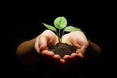Hands holding sapling soil royalty free stock photos