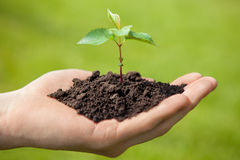 Hands holding sapling Royalty Free Stock Photo