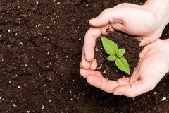 Hands holding sapling in soil Stock Photos
