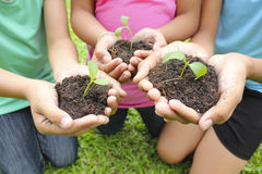 Hands holding sapling in soil surface Royalty Free Stock Photography