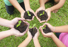 Hands holding sapling in soil surface royalty free stock image