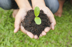 Hands holding sapling in soil surface Stock Photography