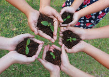 Hands holding sapling in soil surface Royalty Free Stock Images