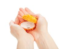 Hands holding a sea shell Royalty Free Stock Photo