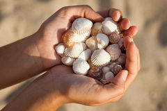 Hands holding sea shells. Stock Photo