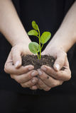Hands holding seedleng Royalty Free Stock Image