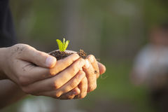 Hands holding seedleng Stock Images
