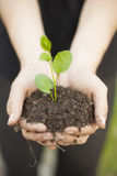 Hands holding seedleng Royalty Free Stock Photo