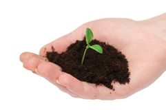 Hands holding seedling Stock Photo