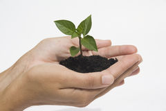 Hands holding seedling Royalty Free Stock Image