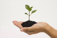 Hands holding seedling Stock Images