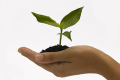 Hands holding seedling Royalty Free Stock Photography