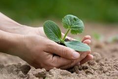 Hands holding seedling with fertile soil Stock Image