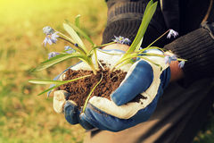 Hands holding seedling flower Royalty Free Stock Photos