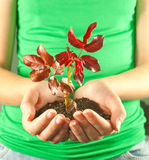 Hands holding seedling grown from soil in her hand Royalty Free Stock Photos