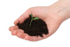 Hands holding seedling isolated Royalty Free Stock Photography