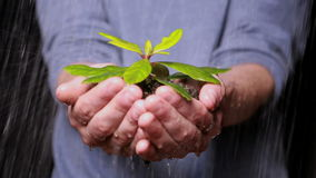 Hands holding seedling in the rain stock video footage