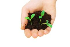Hands holding seedlings. Isolated on white background Stock Images