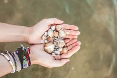 Hands holding shells caught from the sea stock images