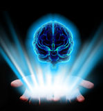 Hands holding brain. Hands holding shiny human brain on black background Stock Photography