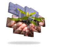 Hands holding shrub on abstract screen Royalty Free Stock Image
