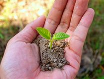 Hands holding a small green plant stock photos