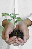 Hands holding small plant Stock Image