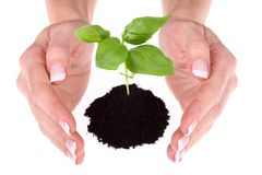 Hands holding a small plant Stock Photos