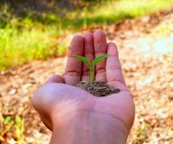 Hands holding a small plant in soil stock photo