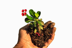 Hands holding a small tree isolated Stock Images
