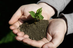 Hands holding small young plant, young tree on grass background Stock Photos