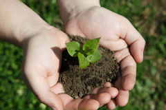 Hands holding small young plant, young tree on grass background Royalty Free Stock Photos
