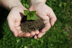Hands holding small young plant, young tree on grass background Royalty Free Stock Images