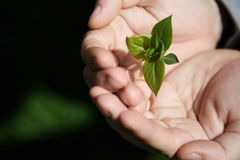 Hands holding small young plant, young tree on grass background Royalty Free Stock Photography