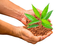 Hands holding small young tree Stock Images