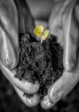Hands holding Soil and Small Green Leaves, concept of hope stock photos