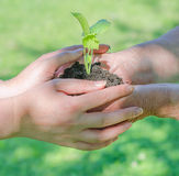 Hands holding soil with sprout Stock Images