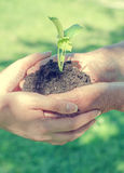 Hands holding soil with sprout Stock Photo
