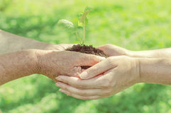 Hands holding soil with sprout Stock Photography