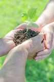 Hands holding soil with sprout Royalty Free Stock Photos