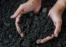 Hands holding soil with young plant Stock Photos