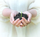 Hands holding solid with green sprout Royalty Free Stock Photos