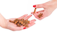 Hands holding spices, cinnamon and anise Royalty Free Stock Image