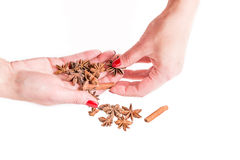 Hands holding spices, cinnamon and anise Stock Photography