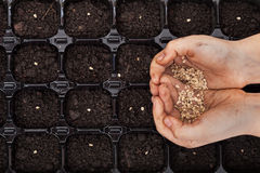 Hands holding spring seeds ready to sow stock photo